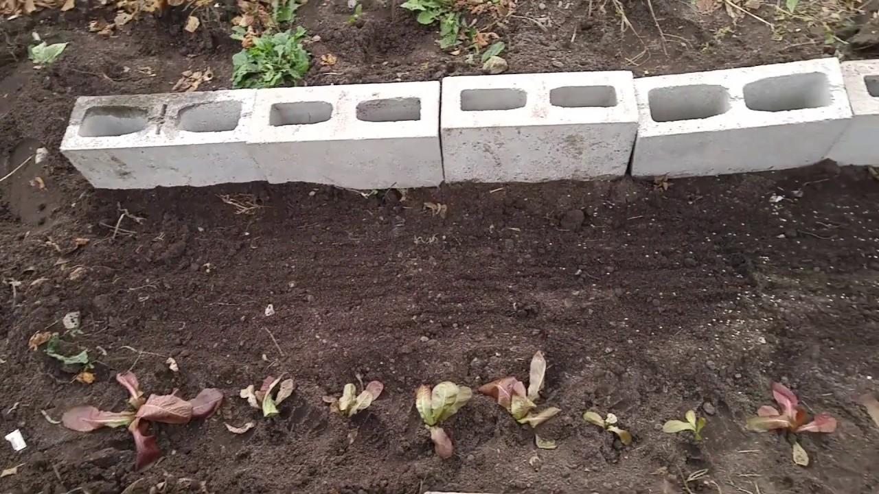 starting a winter garden in ontario canada zone 5b winter