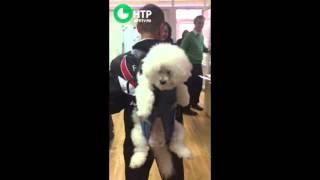 Собака-рюкзак