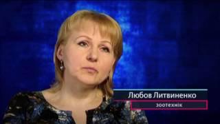 Зачем российские ученые создают крыс киборгов?   Секретный фронт, 26 04 2017