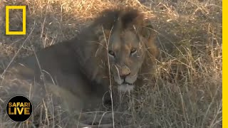 Safari Live - Day 360 | National Geographic
