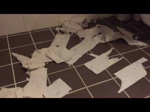 Isidor the Egyptian Mau Cat vs toilet paper