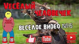 10 минут смеха до слез, весёлое видео, попробуй не засмеяться, ржака, приколы 2020, лютые приколы №6