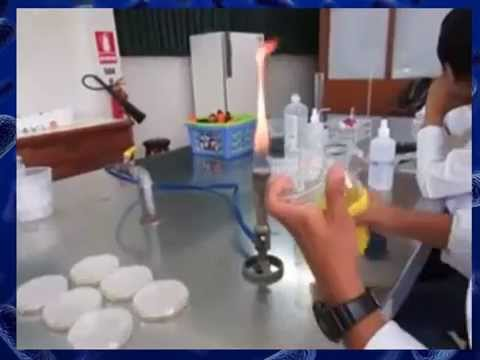 Kinetics of Bacterial Growth-Experiment