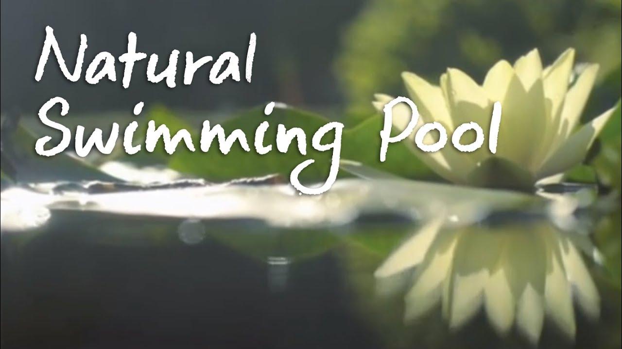 Natural Swimming Pool - YouTube