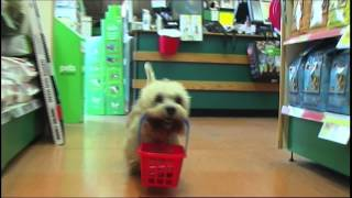 Cleethorpes Pets At Home Advert
