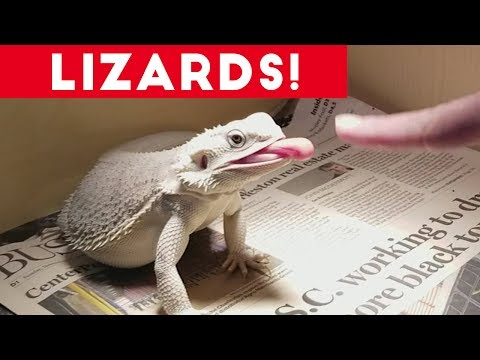 Funniest Lizard & Reptile Blooper & Reaction Videos of 2017 Compilation | Funny Pet Videos