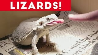 Download Funniest Lizard & Reptile Blooper & Reaction Videos of 2017 Compilation | Funny Pet Videos Mp3 and Videos
