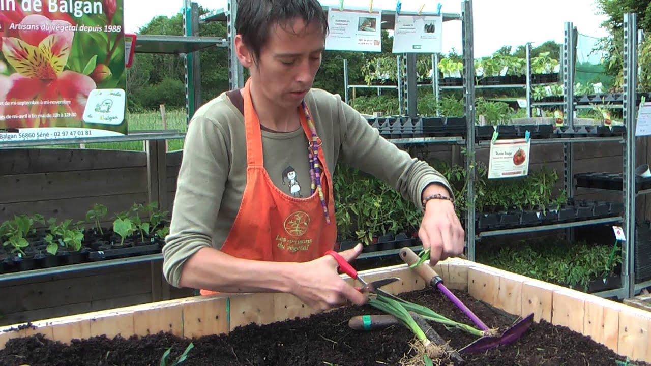 Comment bien planter les poireaux ? - YouTube