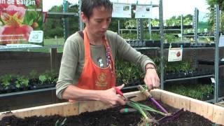 Repeat youtube video Comment bien planter les poireaux ?