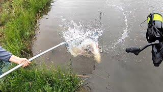 ТАКОГО ДРАКОНА ЕЩЕ НЕБЫЛО ловля толстолоба на технопланктон снасть на толстолоба рыбалка толстолоб