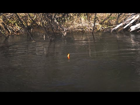 STEELHEAD BOBBER DOWNS - Small Creek Battles With Danny Colville