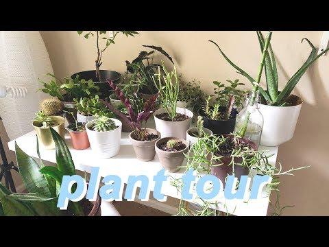 MEET MY PLANTS || my indoor plant collection