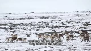 02 Respect the First Herd - Hunting Caribou in the Fall