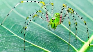 10 Terrifying Facts About Spiders