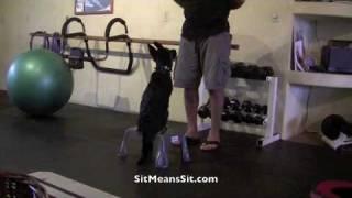 Sit Means Sit Hawaii German Shepherd Puppy Training Day #8