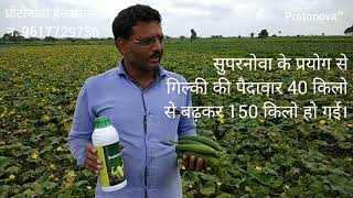 गिलकी की सफल खेती Sponge Gourd Cultivation - A sucess story of Shri Narendra Patidar
