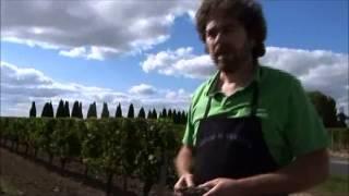 Best Wines Online: Harvest at La Violette Pomerol 2009