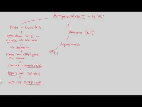 Excretion - Nitrogenous Wastes I | BIALIGY.com
