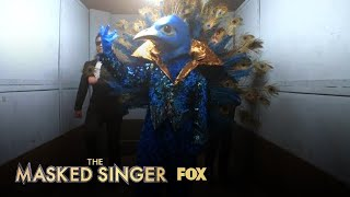 The Clues: Peacock | Season 1 Ep. 3 | THE MASKED SINGER