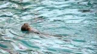 Синхронное плавание, соло