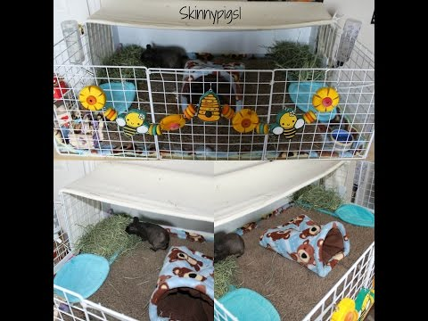 setting-up-a-senior-guinea-pigs-cage-(c&c-cage)