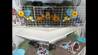 Setting Up A Senior Guinea Pigs Cage (C&C Cage)