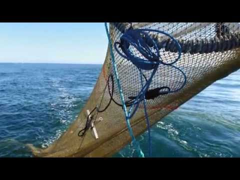 Sustainable Fishing in the Torres Strait Prawn Fishery