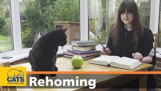 Black Cats: 5 Common Misconceptions