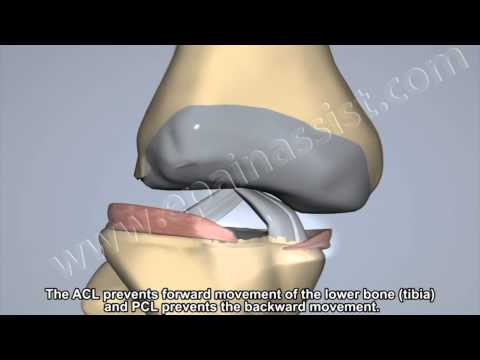 Ligaments Of The Knee, ACL, PCL, and Collateral Ligaments