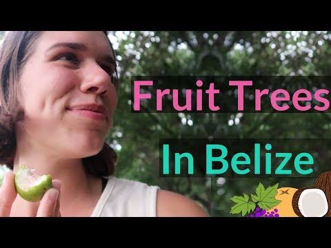 Eating Exotic Fruits in San Ignacio Belize