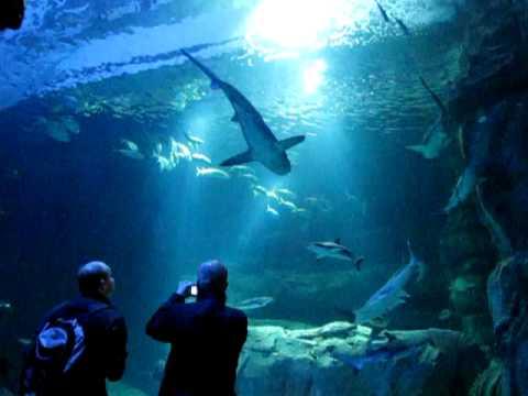 aquarium cineaqua 29