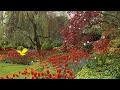 Всем красавицам сюрприз из волшебных садов к 8 марта!