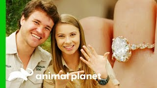 Gambar cover Bindi And Chandler Are Engaged! | Crikey! It's The Irwins