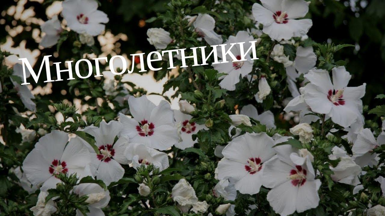 Многолетние цветы для Сибири и Урала: какие многолетники лучше садить