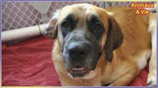 Elle adopte une chienne abandonnée et découvre qu'elle cachait un immense secret thumbnail