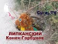 In Lipcani gropile deschise se acopera cu... jucarii - Curaj.TV
