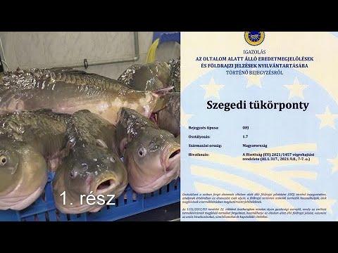 Szegedi tükörponty 1. rész