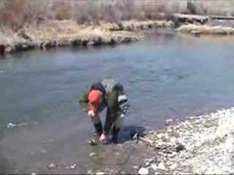Beaverhead river brown trouts youtube for Beaverhead fishing report