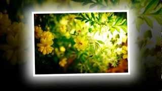 [HD] Những bản nhạc không lời về mùa xuân hay