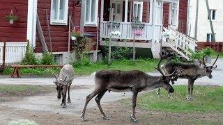 City Reindeers 30.7.2013, Rovaniemi - Lapland - Finland