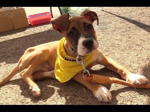 Emotiva Campaña De Adopción De Perros Y Gatos De Alcalá De Henares