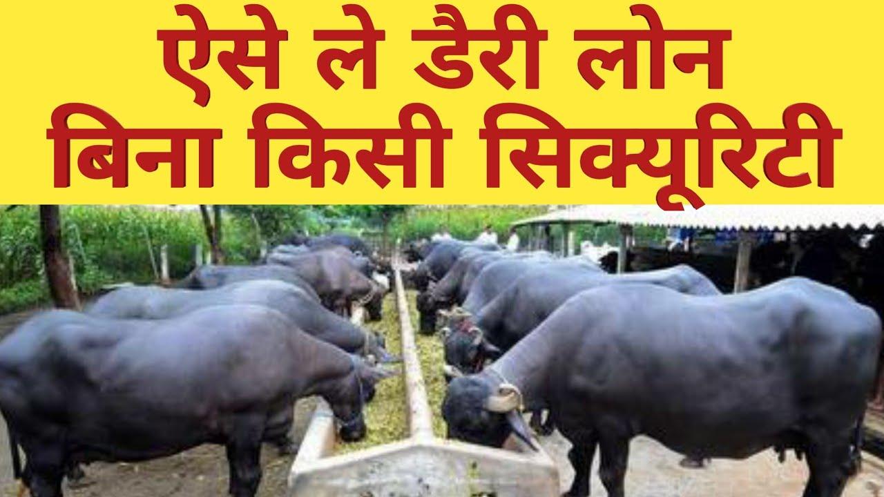 ऐसे मिलेगा पशुपालन लोन How to get #Loan Subsidy For Dairy Farm from  Nabard Mudra loan