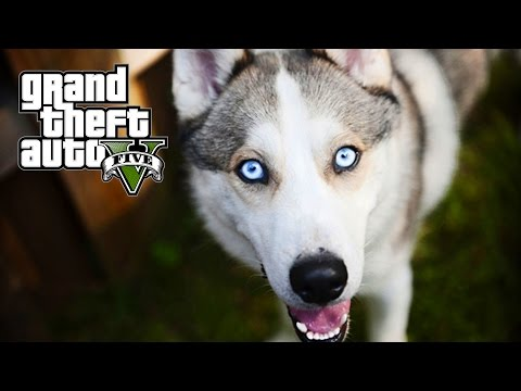 GTA 5 MOD VITA REALE #6 - Ho comprato un HUSKY! from YouTube · Duration:  23 minutes 59 seconds