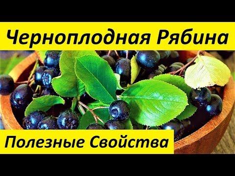 Черноплодная Рябина.Полезные Свойства Черноплодной Рябины