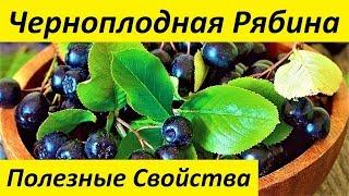видео Рябина черноплодная: посадка и уход, полезные свойства