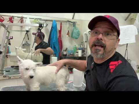 Westie Grooming - Free Bonus video