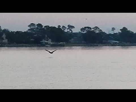 Pensacola pelican in the cradle of Naval aviation