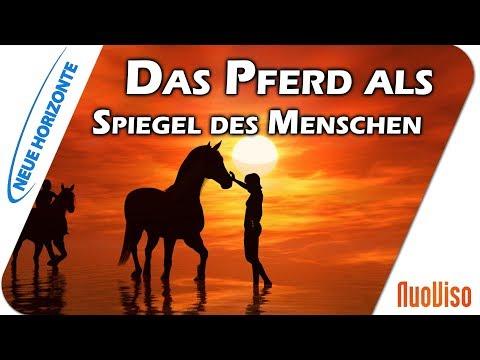 Pferde als Lehrer und Spiegel des Menschen - Annette Asmus-Budny