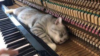 GATO + PIANO