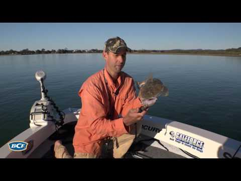 BCF - How to catch Flathead on lures   - BCF
